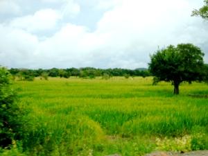 road near Kandy