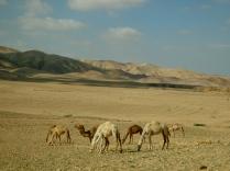 driving near Mount Nebo