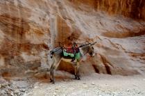 little donkey, Petra