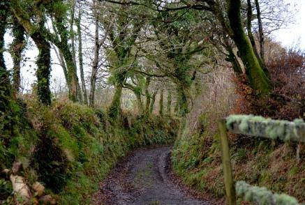 walking near Warleggan