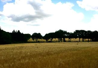Provençal country-side