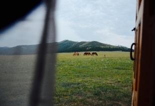 wild-ish horses