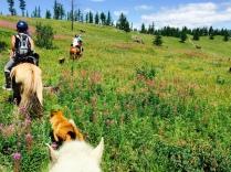 day trip on horseback