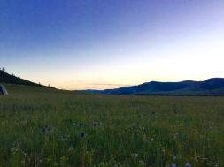 dusk in Jalman Meadows