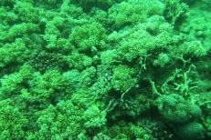 deep-ish ocean